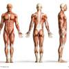 Rückenmark und Kopftransplantation