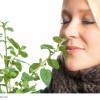 Stevia süß und schmacklhaft