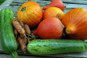 Zucchini als Gift